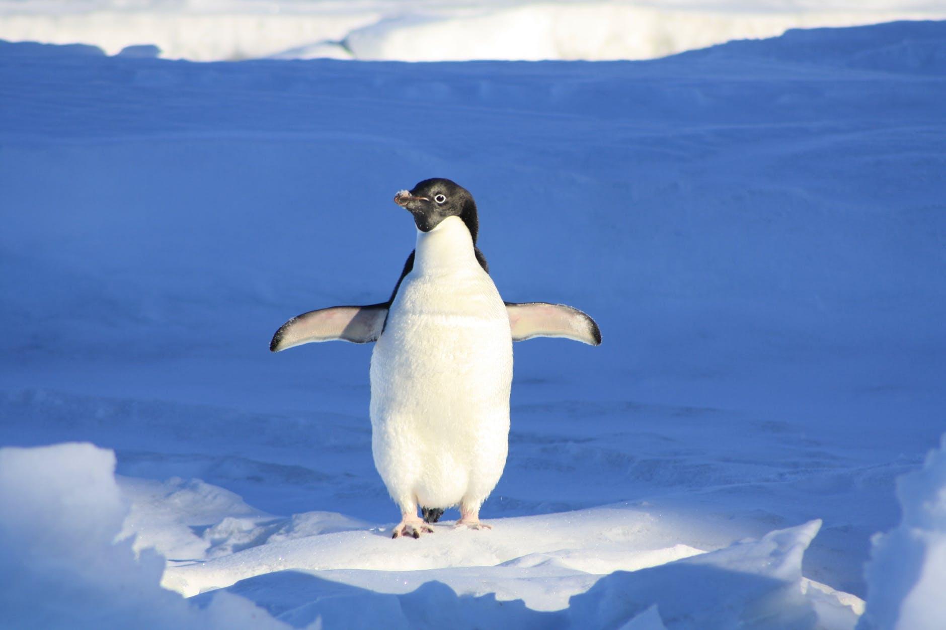 penguin-funny-blue-water-86405.jpeg