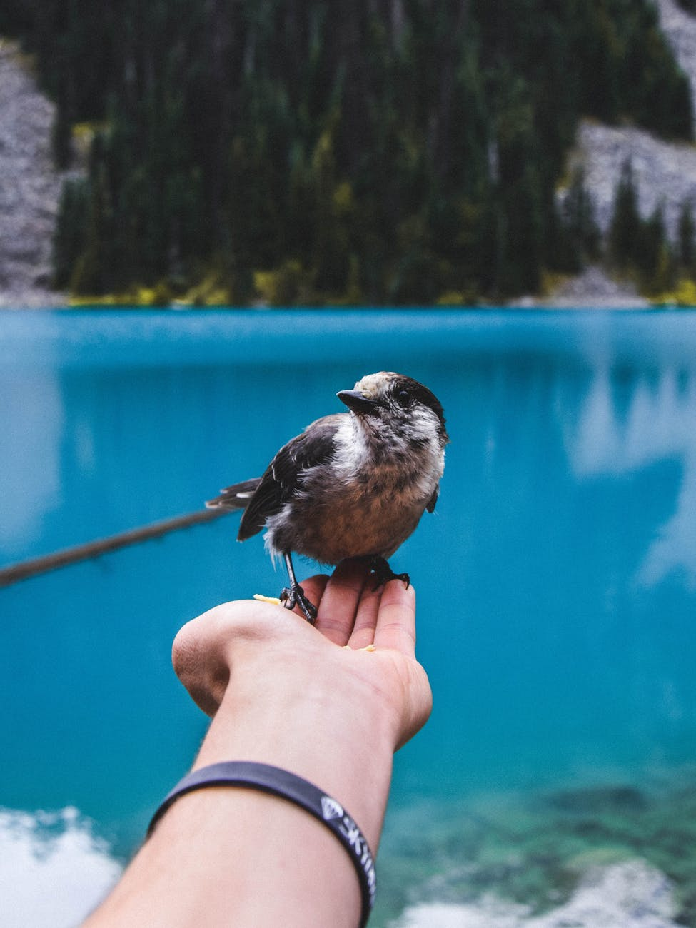 bird perched on person s hand