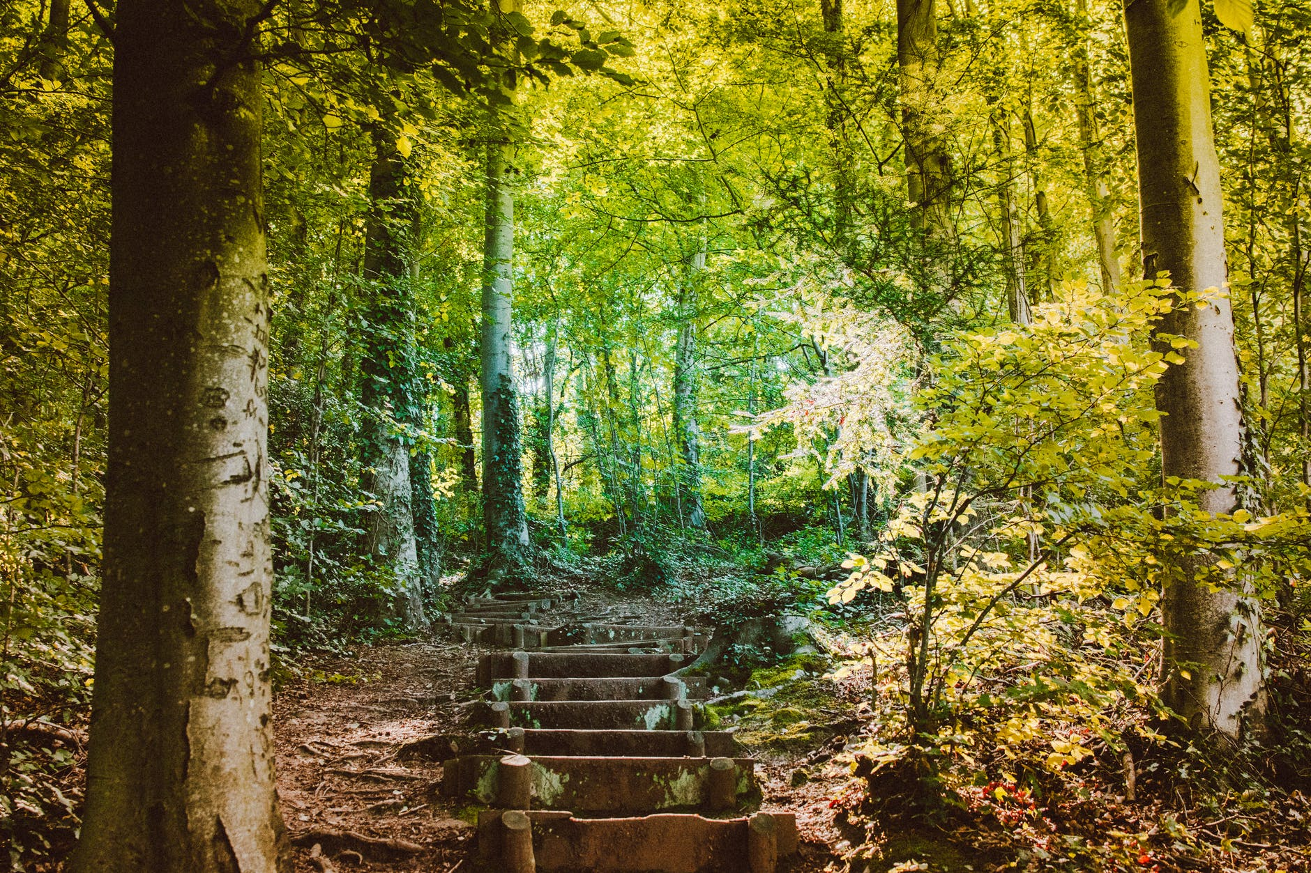 forest with concrete steps