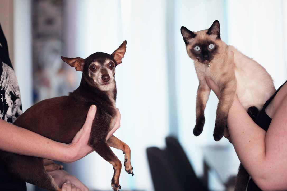 people holding siamese cat and short coat black dog