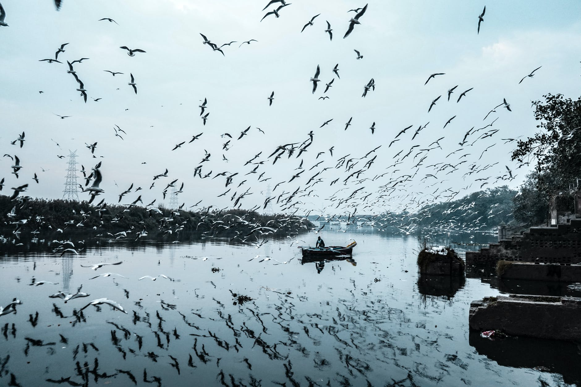 photo of birds flying during daytime