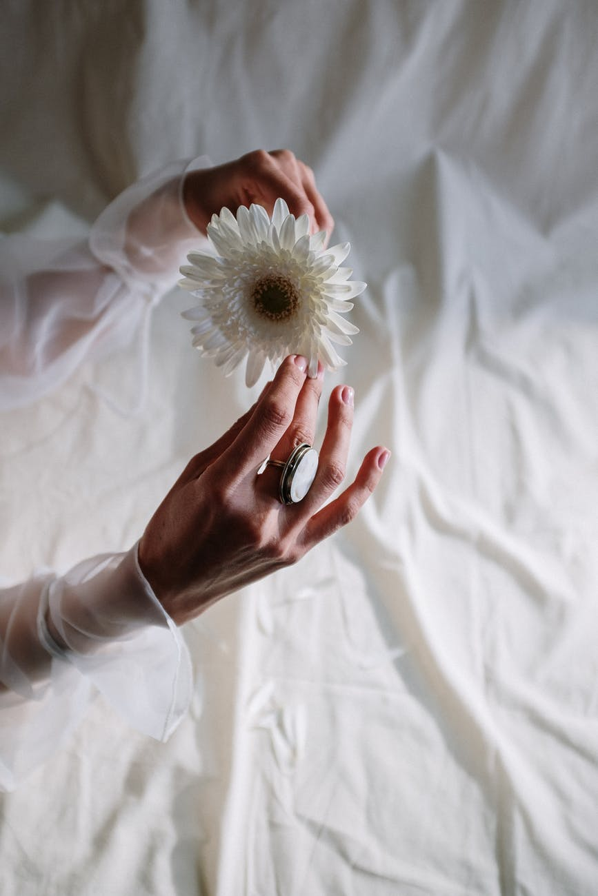person holding white dandelion flower
